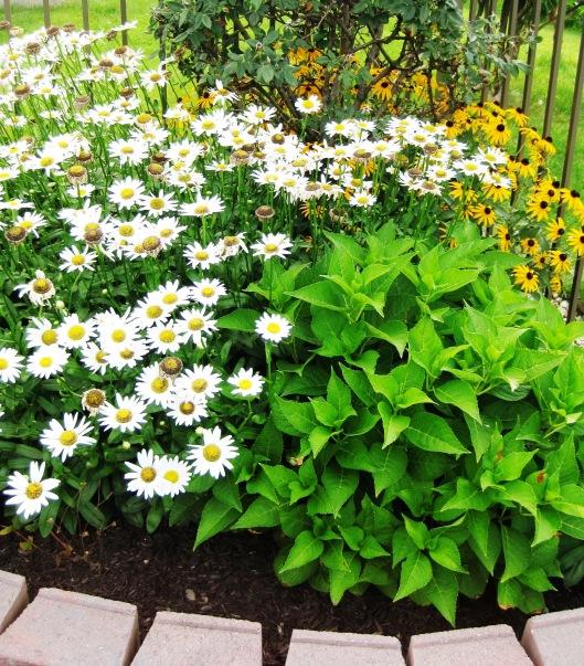 Daisy Garden 2