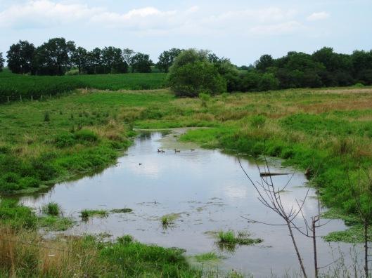 Lazy Field Stream