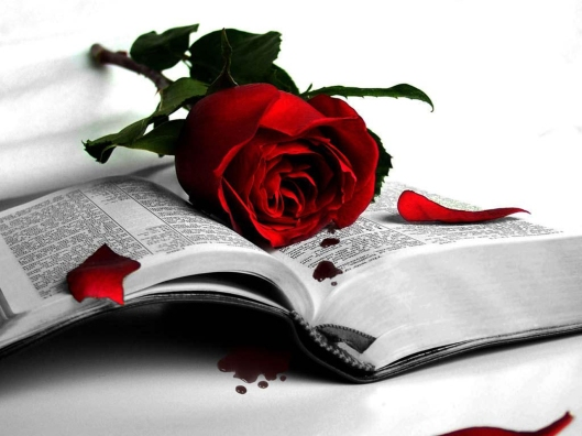 book-rose-red-fall