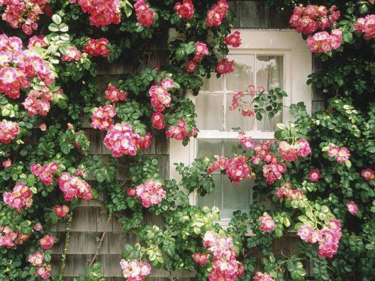 Loves Flowers