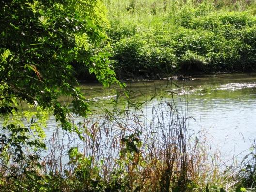 babbling brook1