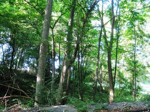 Forest Glenn
