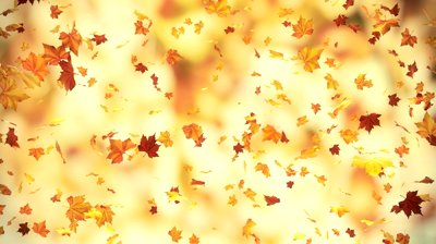 falling leaves essay Why leaves change color as featured on weathercom the splendor of autumn every autumn we revel in the beauty of the fall colors.