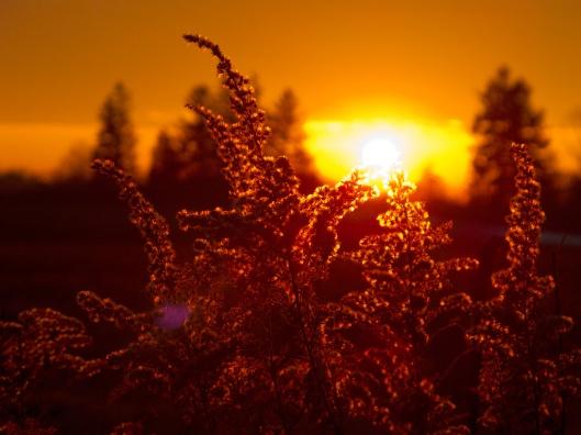 sunrise_1989