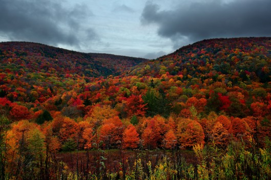 Autumn Mountain Foliage