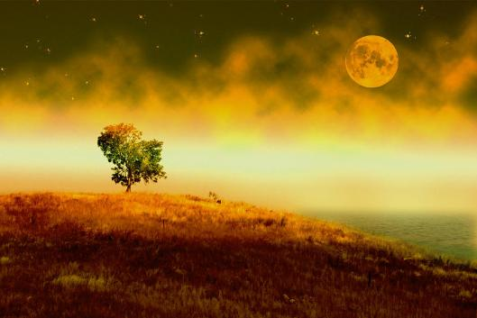 in-the-stillness-of-night-holly-kempe