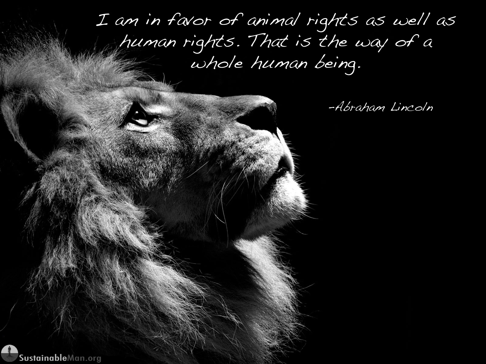 Animal Rights Quotes Custom Animal Rights Quotes  Quotes Of The Day