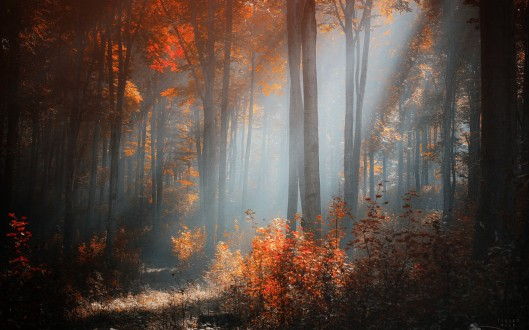 gentle_autumn_morning