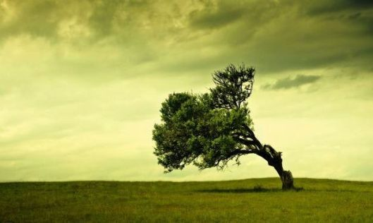 [pictures_4ever_eu]%20lonely%20tree%20155472