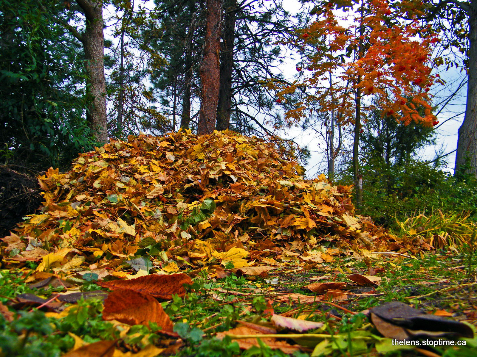 Pileの画像 p1_26