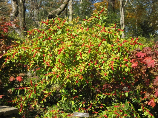 Longwood Gardens 004