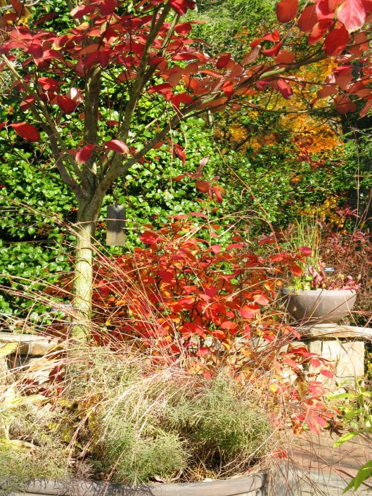 Longwood Gardens 005