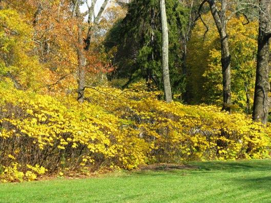 Longwood Gardens 008
