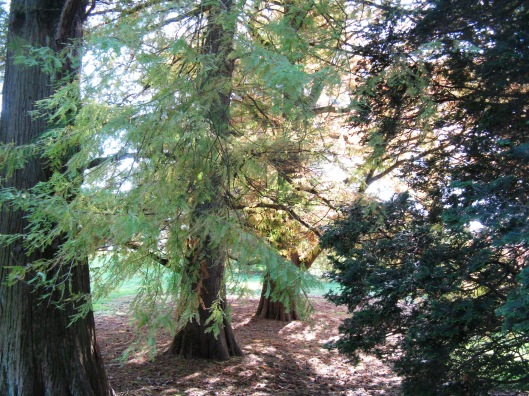 Longwood Gardens 009