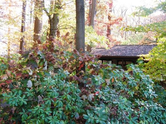 Longwood Gardens 014