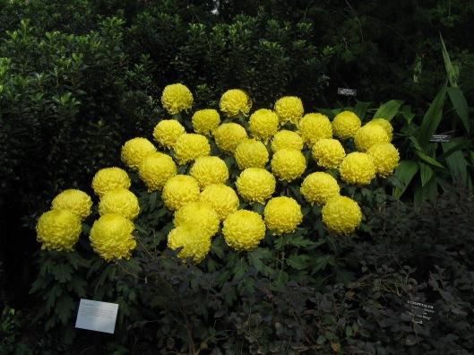 Longwood Gardens 035