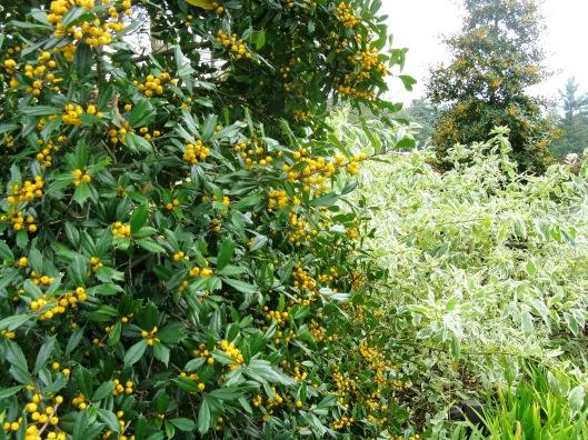 Longwood Gardens 070