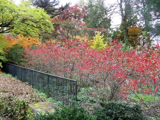 Longwood Gardens 092