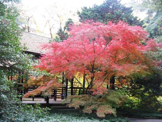 Longwood Gardens 096