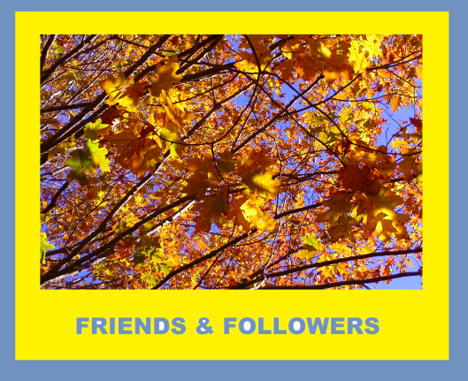 FRIENDS-FOLLOWERS-award