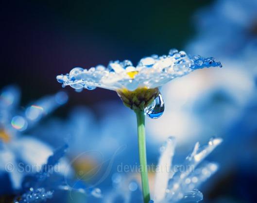 Beautiful_Dreams4[1]
