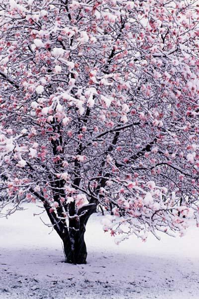 Arboretum_spring_snow00_4