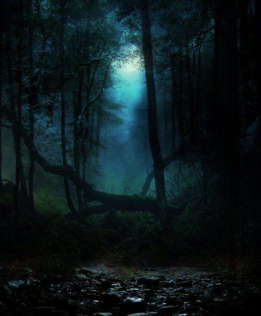 fallen-trees-night