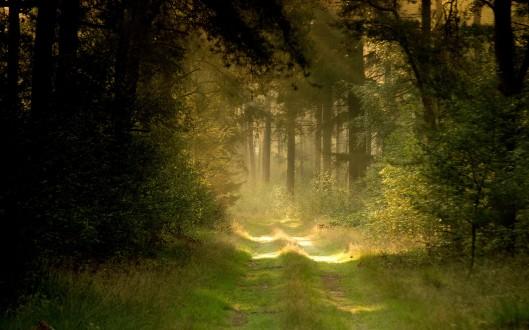 Path4