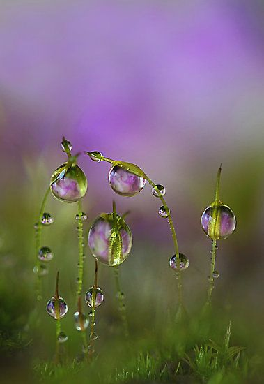 Shades of Lavender15
