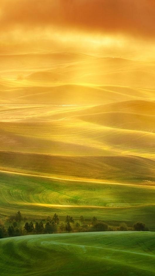Golden Grace 1