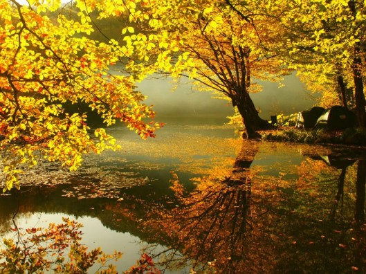 Golden Autumn 5