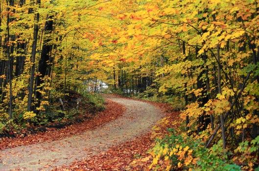 Golden Autumn1