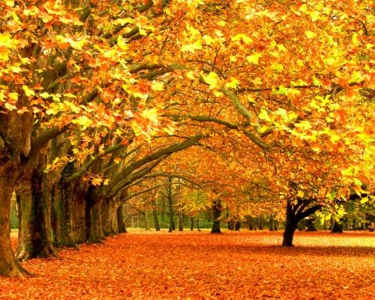 Golden Autumn2