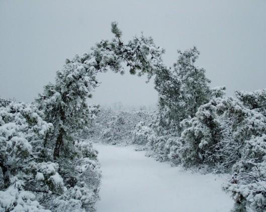 snowstorm 026a