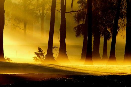 Tide of Morning