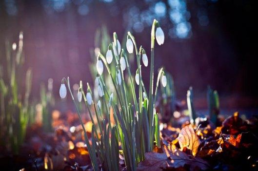 Spring 3333