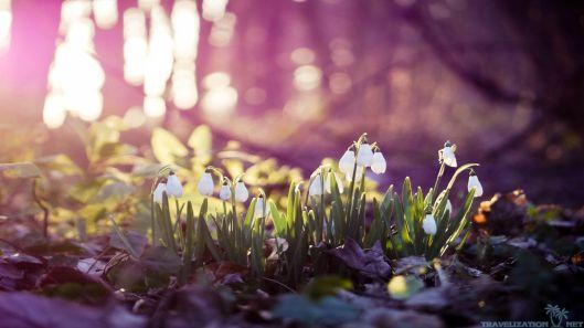 spring33
