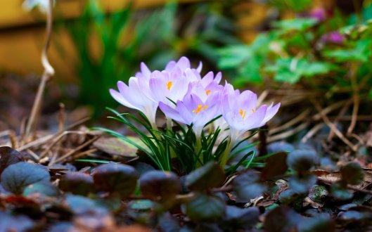 Spring333