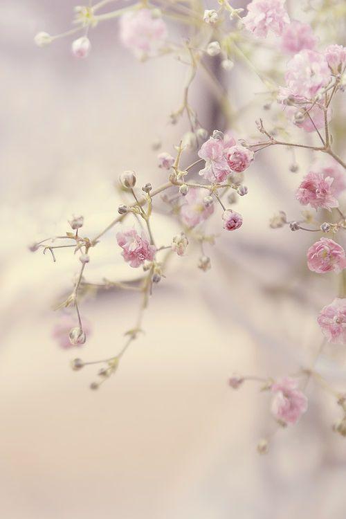 Springtime5