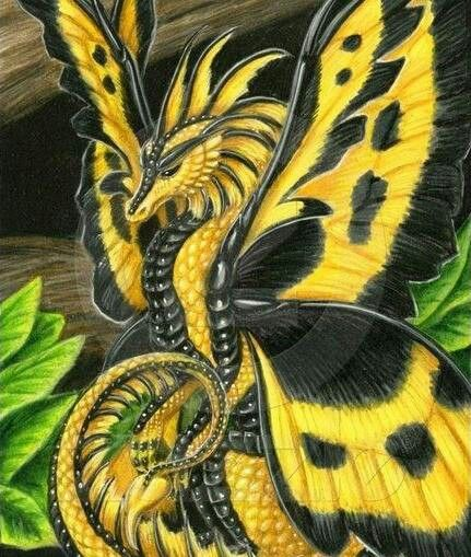 butterflydragon1