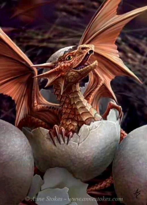 Dragonbaby3