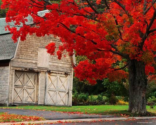 autumn_ny