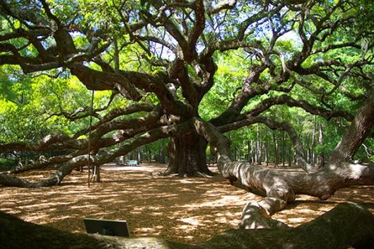 Tree5