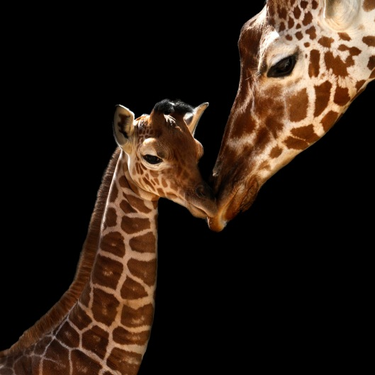 Mothers Love1