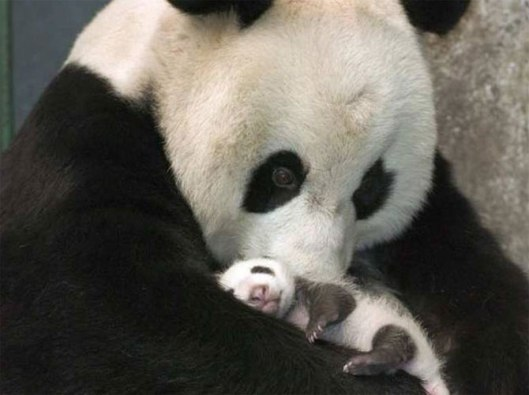 Mothers Love3
