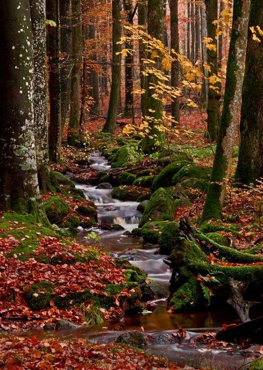 autumnal4