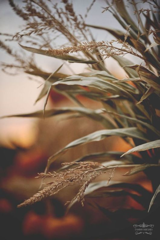autumnal5