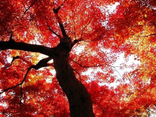 autumn-flame