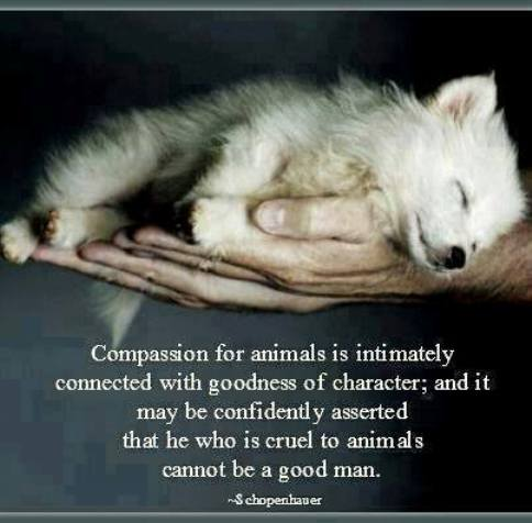 compassion-3
