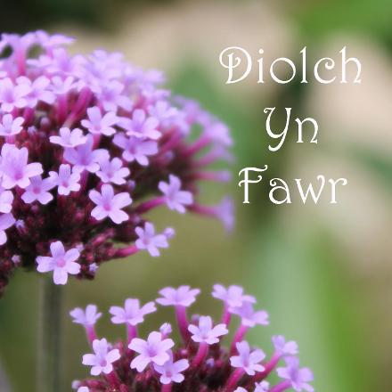 diolch-yn-fawr-web